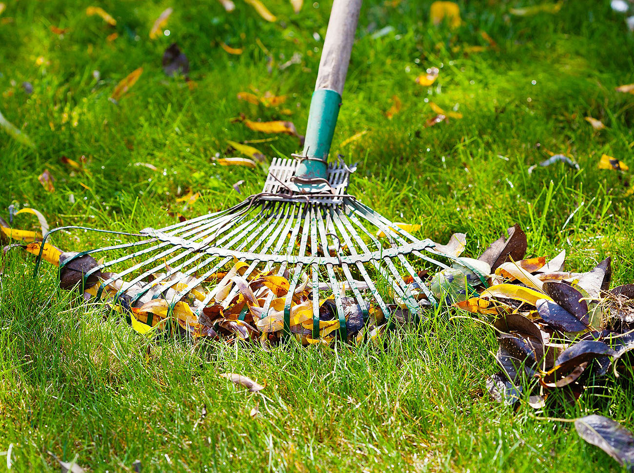We carry out lawn treatments 2-3 times a year, once in the spring, once in the summer and then once in the autumn. During very dry, hot summers, a mid-summer treatment is not possible with soluble feed.