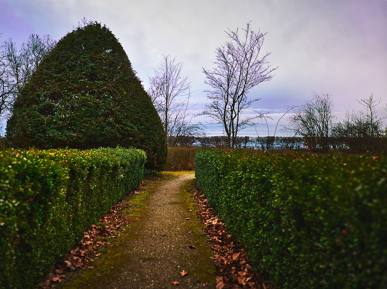 Hedge cutting we identify a cutting schedule for all hedges and follow it closely throughout the year. If a hedge is left for too long without cutting it will outgrow its shape and thereafter be very difficult to restore. We will replace any dead hedging when necessary.