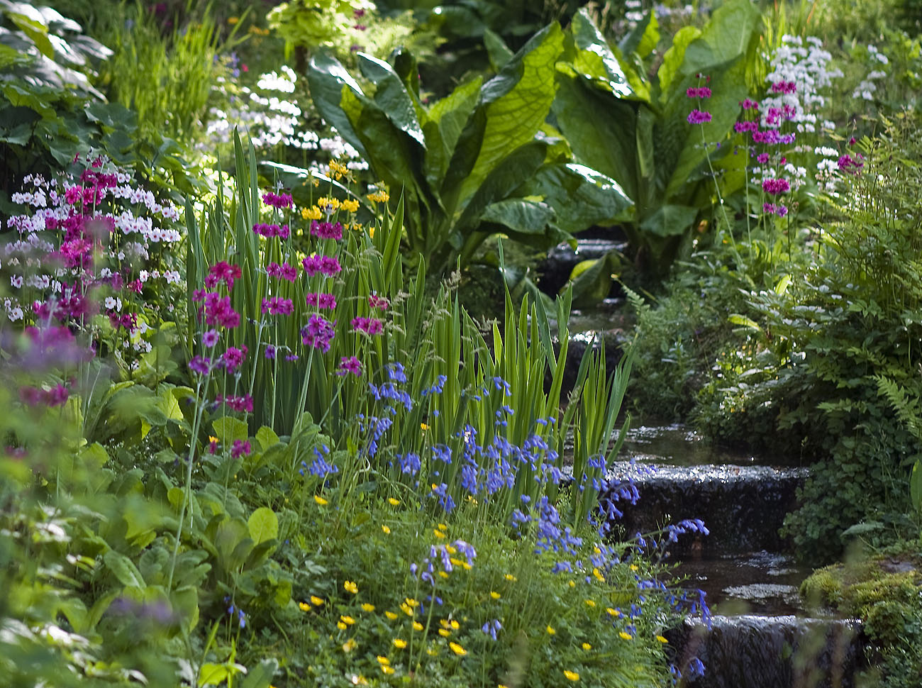 Wild flower planting, shrubbery, plants, tree planting, tree maintenance, lawn care, garden services Chesham, St Albans, Tring, Beaconsfield, Chalfont St Peter, Fulmer, Gerrards Cross, High Wycombe, Holmer Green, Little Chalfont